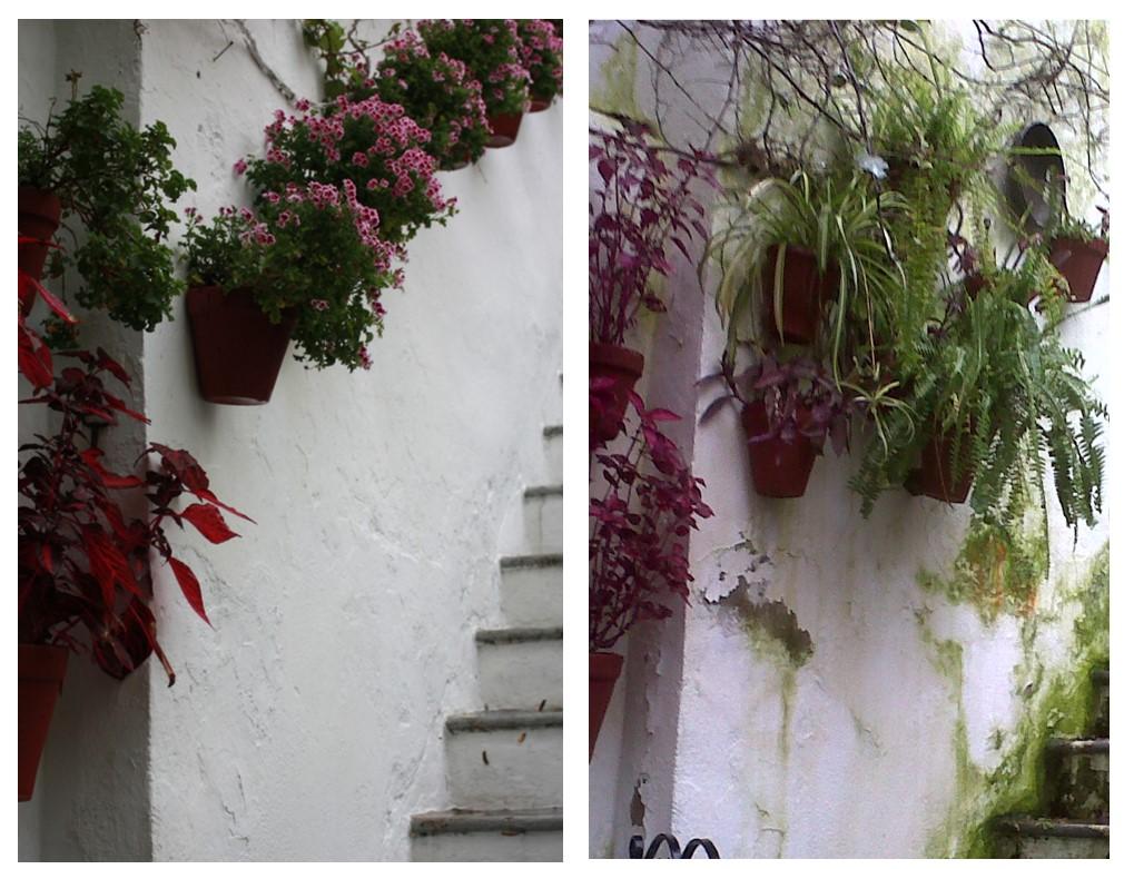 Rehabilitación en muros de morteros de cal